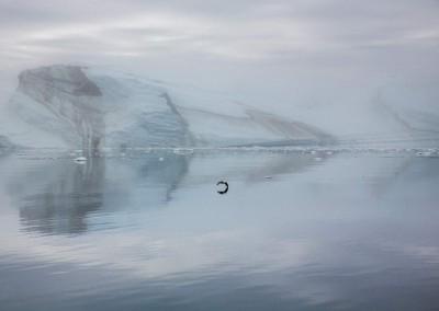 CM-Grönland14