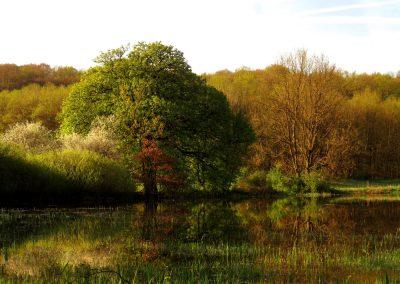 Höchst Überschwemmung Baum Frühling 1
