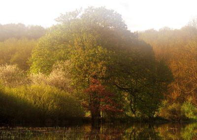 Höchst Überschwemmung Baum Frühling 2