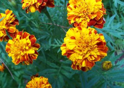 Madeira 2007 104_001
