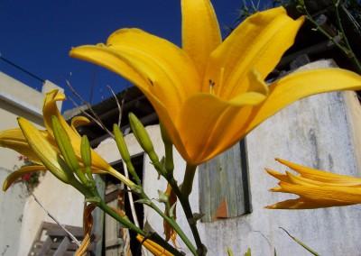 Madeira 2007 229_001