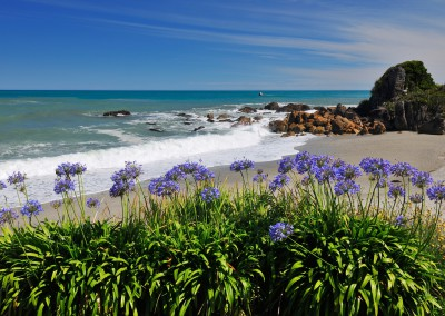 Beach with Flowers in Summer, Fox River, West Coast, South Island, New Zealand