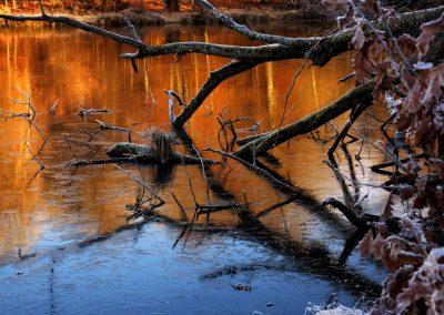 Thiergartenweiher Baum im Wasser Winter