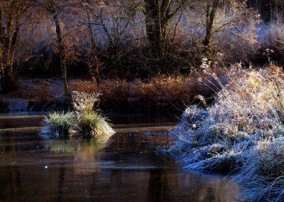 Thiergartenweiher Grasinsel 2 Winter