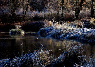 Thiergartenweiher Grasinsel 4 Winter