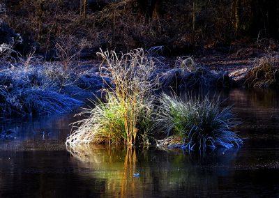 Thiergartenweiher Grasinsel Winter