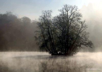Thiergartenweiher Insel 1 Frühjahr