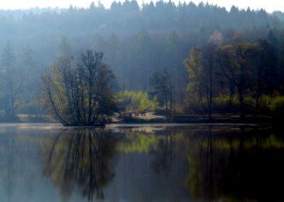 Thiergartenweiher Insel 8 Frühjahr