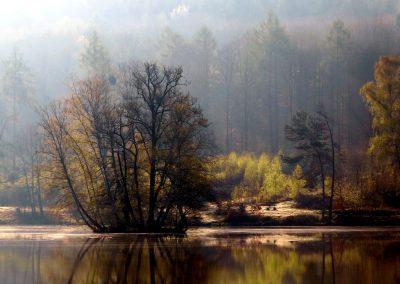 Thiergartenweiher Insel 9 Frühjahr