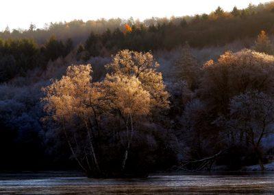 Thiergartenweiher Insel Oberlicht