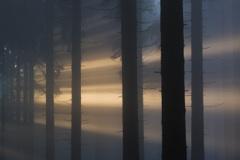 NFT2014_5_Mythos-Wald_Kraus