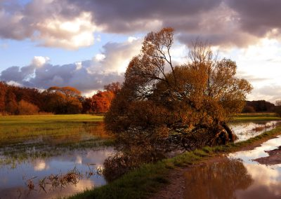 Eichen Überschwemmung Herbst.3jpg