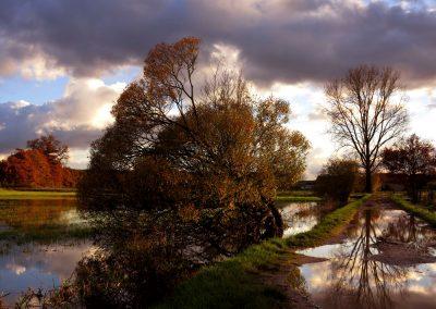 Eichen Überschwemmung Herbst.4jpg
