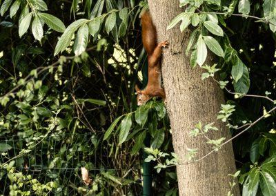 Eichhörnchen_Bad Nauheim_Elke