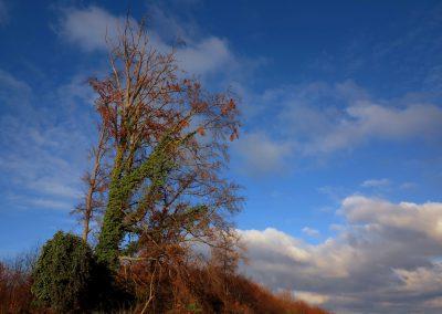 Erbstadt Baum und Efeu 2 12 18