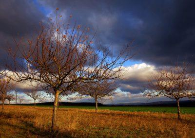 Erbstadt Obstbäume 12 18