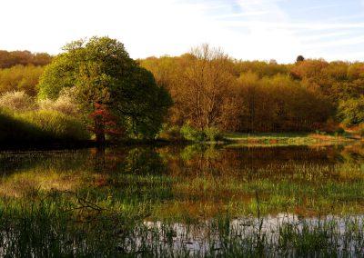 Höchst Überschwemmung Baum Frühling 3