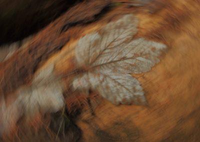 Kreislauf der Natur 001