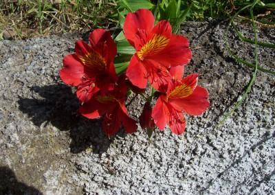 Madeira 2007 233_001
