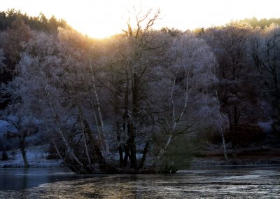 Thiergartenweiher 2 Insel Winter