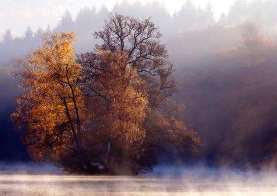 Thiergartenweiher Insel im Herbst