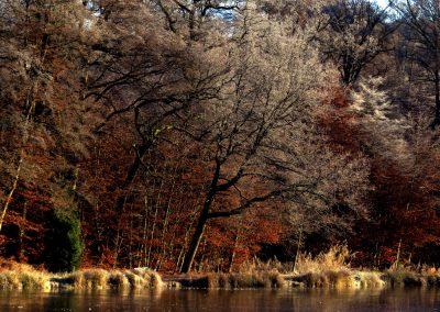 Thiergartenweiher Seitenlicht Winter