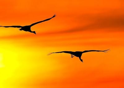 WU_Kraniche im Licht der aufgehenden Sonne